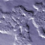 májrák sejtek